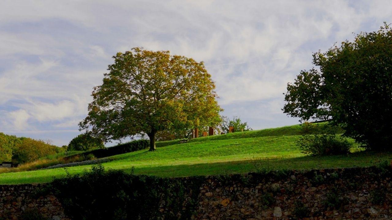 Paysage, verdure, arbre, Coline